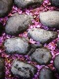 Steine mit den rosafarbenen Syringablumenblättern lizenzfreies stockfoto