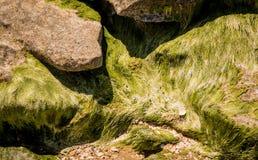 Steine mit grünem Moos Lizenzfreies Stockfoto