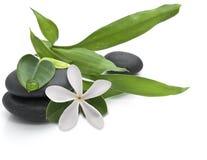 Steine mit grünen Blättern und weißer Blume Stockfoto