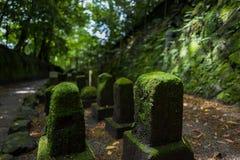 Steine mit Moos in der Sonne in Kagoshima lizenzfreie stockfotografie