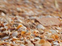 Steine, Muscheln, Sand. Lizenzfreies Stockbild