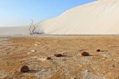 Steine, Sand und trockene Anlage lizenzfreies stockbild