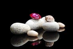 Steine u. Shells Stockbild