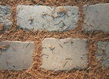 Steine und altes Laub des Tannenbaums Lizenzfreie Stockfotografie