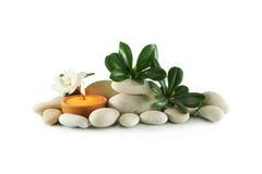 Steine und Anlage mit grünen Blättern Stockfotografie