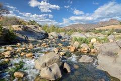 Steine und Anlagen in einer Umwelt des schnellen Flusses Stockbild