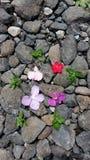 Steine und Blume Lizenzfreie Stockbilder