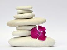Steine und Blume lizenzfreie stockfotos