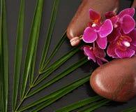 Steine und Blume auf schwarzem Hintergrund Lizenzfreies Stockbild