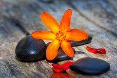 Steine und Blumen Stockbilder