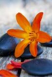 Steine und Blumen Lizenzfreie Stockfotografie