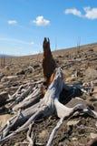 Steine und ehemaliger Wald Stockfoto