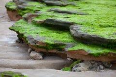 Steine und Felsen bedeckt mit Grünalgen Stockfotografie