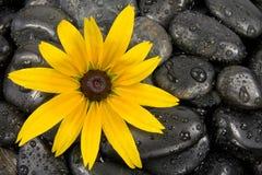 Steine und helle gelbe Blume. Lizenzfreies Stockfoto