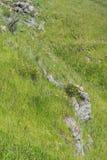 Steine und Mohnblumen stockfoto