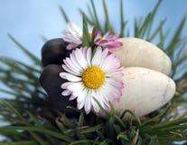 Steine und weiße Blume im Gras Lizenzfreies Stockbild