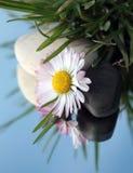 Steine und weiße Blume im Gras Lizenzfreies Stockfoto