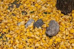 Steine von verschiedenen Größen unter dem Herbstlaub Lizenzfreie Stockbilder