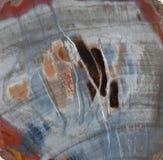 Steinfedern in einer Scheibe des versteinerten Holzes Stockbilder