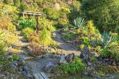 Steingarten mit Succulents und Kakteen stockfotografie