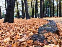 Steingrenze auf dem Gehweg im Park lizenzfreie stockbilder