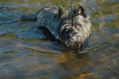 Steinhaufen Terrier lizenzfreie stockfotos