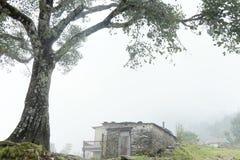 Steinhaus und Baum im Nebel lizenzfreie stockbilder