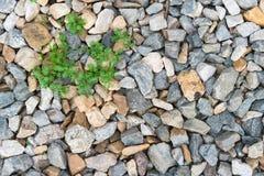 Steinhintergrund mit wenigem grünem Baum Lizenzfreie Stockbilder