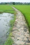 Steinige Bahn unter dem Reisfeld Lizenzfreies Stockfoto