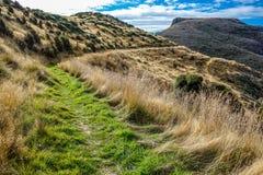 Steinige Bucht-Spitze - Akaroa - Neuseeland Lizenzfreies Stockbild