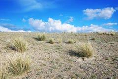 Steinige Wüste und Büschel des Grases Stockfotografie
