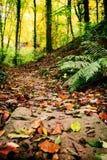 Steiniger Forest Path stockfoto
