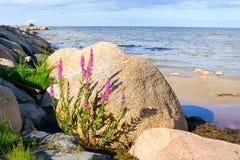 Steiniger Strand Stockbild