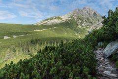 Steiniger Weg, der zu Mala Vysoka führt lizenzfreie stockbilder