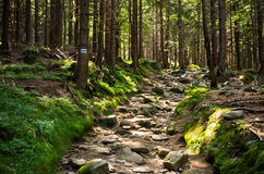 Steiniger Weg im Wald Stockbilder