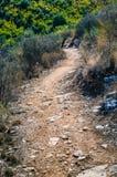 Steiniger Weg zwischen trockenen Büschen auf Korfu-Insel - Griechenland Stockbild