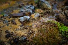 Steiniges isländisches Feld mit Gras und Moos Stockfotografie