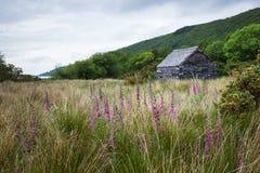 Steinkabine mit Schieferdach in szenischer Wales-Landschaft Stockfotografie