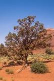 Steinklippen und Wüstenvegetation, südwestlich der USA Denkmal-Tal, Arizona stockfoto