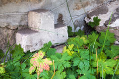 Steinkreuz hinter Pelargonie Lizenzfreie Stockfotos