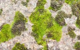 Steinoberfläche mit grünem Mooshintergrund Stockbilder