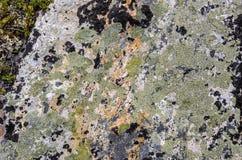 Steinoberfläche umfasst mit Flechte und Moos lizenzfreies stockbild
