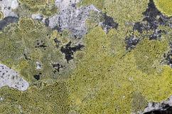Steinoberfläche umfasst mit Flechten stockfoto