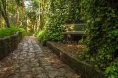 Steinpfad durch einen Wald lizenzfreie stockbilder