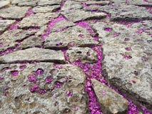Steinpflasterung mit den purpurroten Blumenblättern lizenzfreie stockbilder