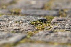 Steinpflasterungsnahaufnahme mit Gelenken, Spalte und ein wenig von GR Lizenzfreies Stockbild