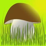 Steinpilz in einem Gras Lizenzfreies Stockbild