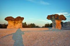 Steinpilze gefärbt im Gelb vom Sonnenaufgang nahe Beli-plast Dorf, Bulgarien Stockfotos