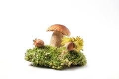 Steinpilzpilz mit Haselnüssen Stockfoto