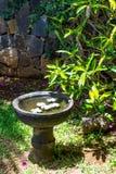 Steinschüssel mit Wasser und Blumen Lizenzfreie Stockfotografie